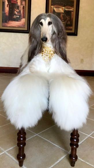 stylish-dog (5)