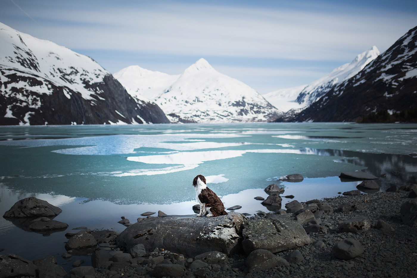 Iceland, Norway, Alaska and more – Here are photos of dogs in mindblowing landscapes