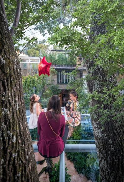 gerardo broissin glass treehouse mexico city (3)