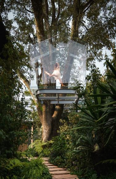 gerardo broissin glass treehouse mexico city (5)