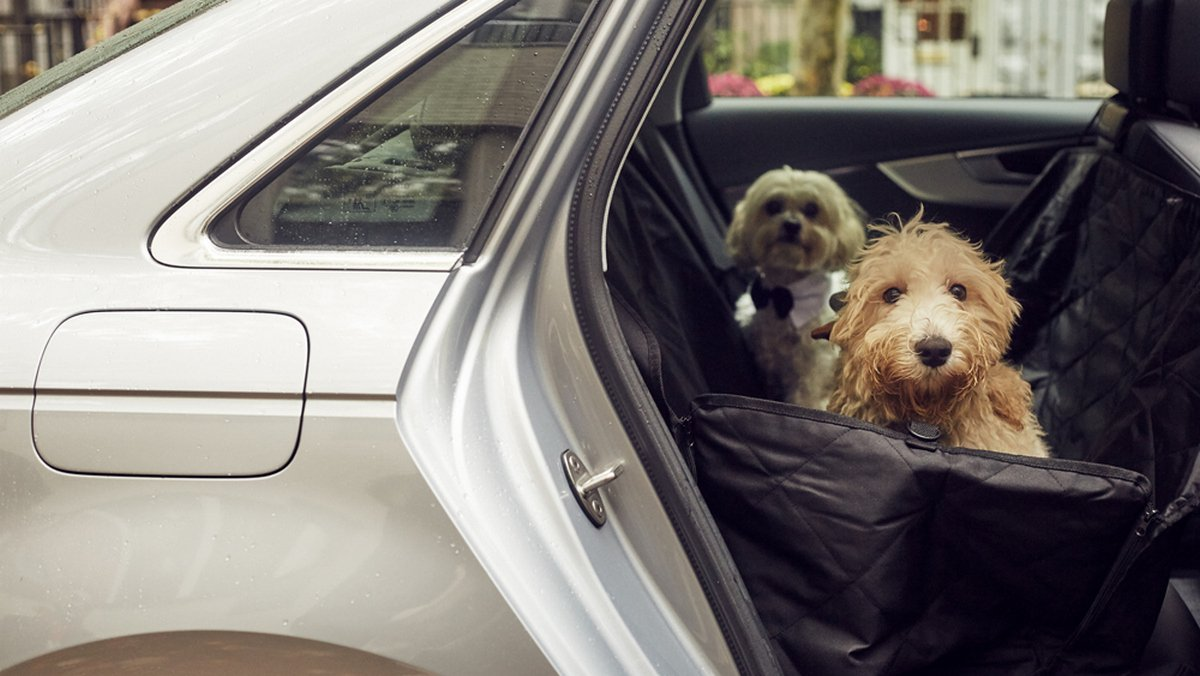 Silvercar by Audi's new package will help you travel with your furry friend stress-free this holiday season -