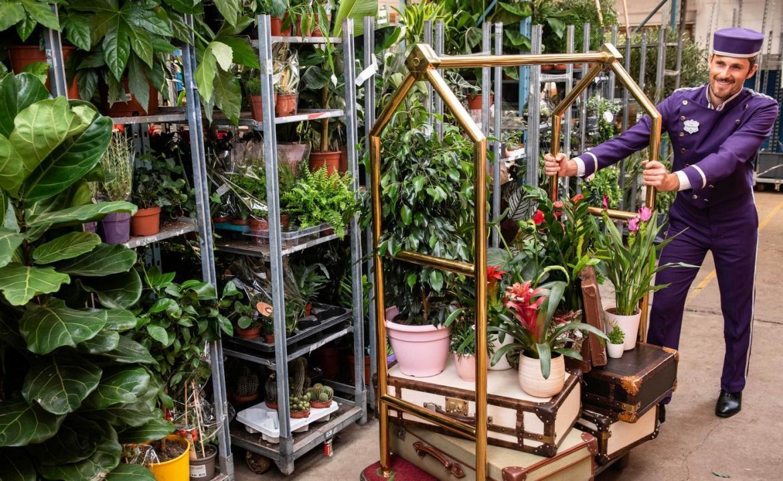 Piante Strane Da Appartamento londra è ora sede del primo hotel per piante da appartamento
