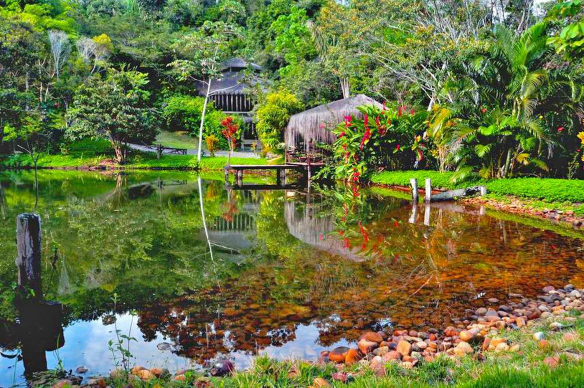 The Spirit Vine Ayahuasca Retreat: a reset for the chaos of modern life -