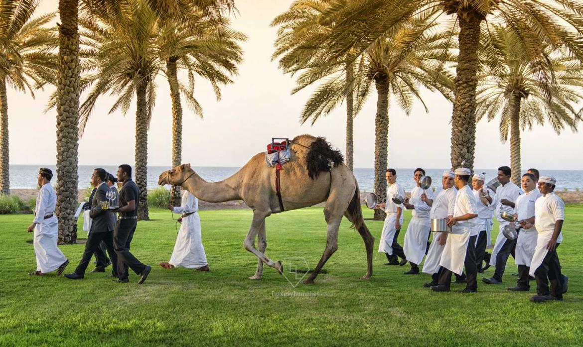 Caravan of Taste lead by a camel at The Chedi Muscat -