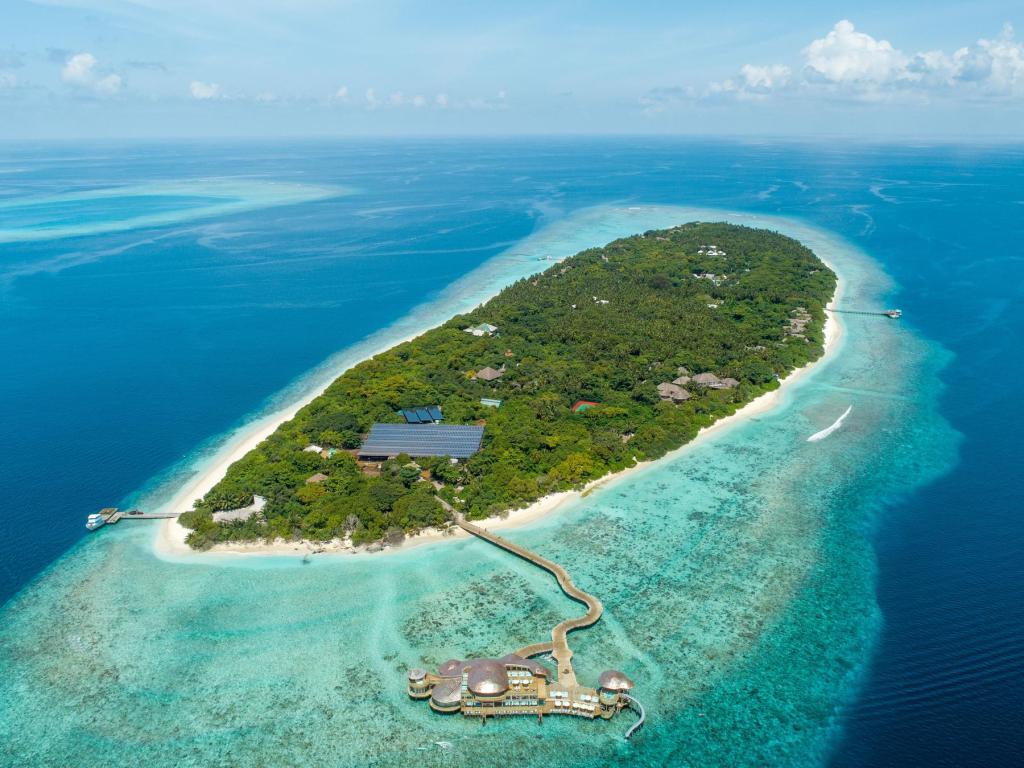 Exclusive - An immunity boosting tea receipe from the ayurvedic doctor at the idyllic Soneva Fushi resort, Maldives : Luxurylaunches