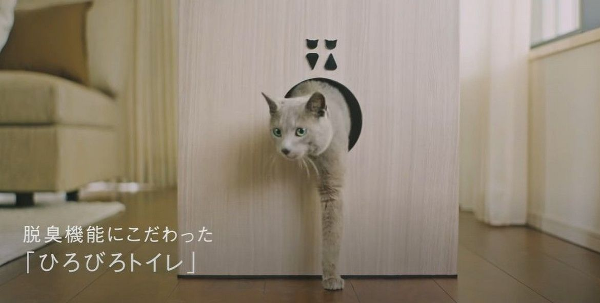 Why just a cat house? This Japanese firm has created a functional four storey luxury building for cats : Luxurylaunches