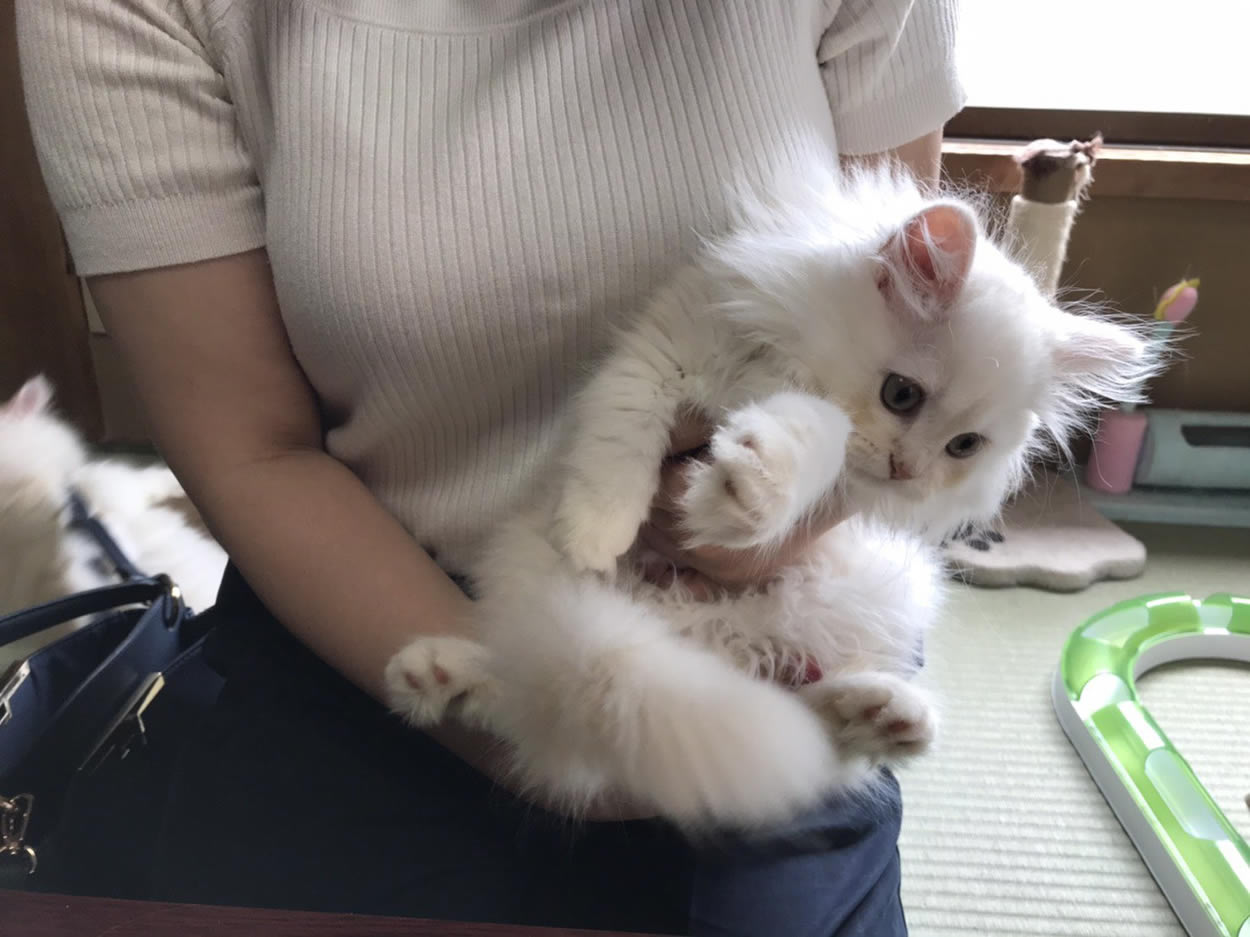 This Japanese Inn has the coolest amenity of all – An adorable cat companion for guests to snuggle and share the room with