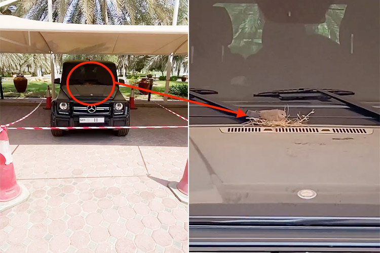 Nature loving crown prince of Dubai cordons off his Mercedes-AMG G 63 SUV to protect a pigeon nesting on it : Luxurylaunches