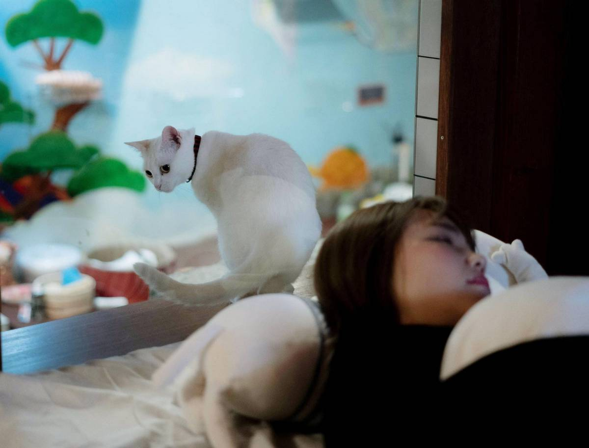 The next best thing after a lullaby – Guests can fall asleep counting cats at this trendy Osaka hostel