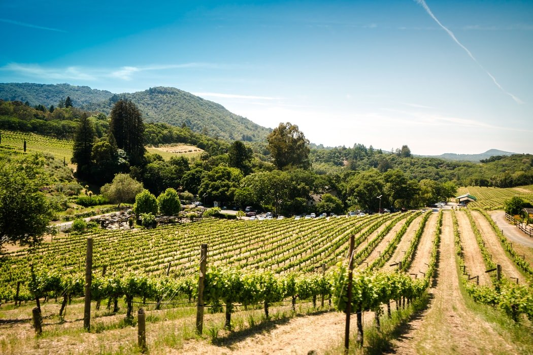 Dream job alert! This wine company will pay you $10,000 per month plus rent to work in Sonoma